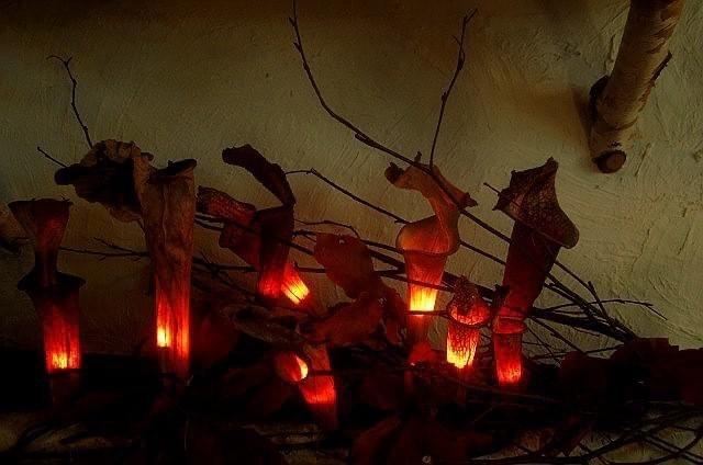 サラセニアの照明